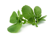 Watercress Large