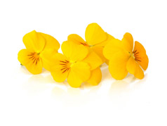Edible flowers Yellow pansies