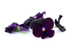 Edible flowers Purple pansies