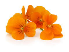 Edible flowers Orange pansies