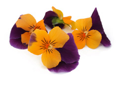Edible flowers Orange/ Purple pansies