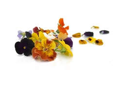 Edible flowers Pansies Mix