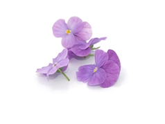 Edible flowers Lavender Pansies