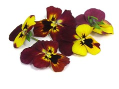 Edible flowersFire Pansies