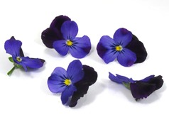 Edible flowers Black/purple pansies