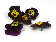 Edible flowers Rubygold pansies