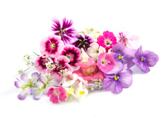 Romantic Edible Flowermix